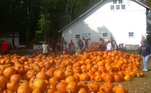 Families selecting pumpkins.